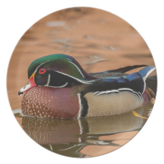 Wood duck swimming in water plate