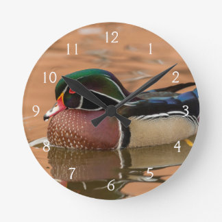 Wood duck swimming in water round clock