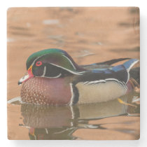 Wood duck swimming in water stone coaster