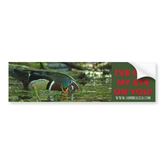 Wood Duck Watching You Bumper Sticker