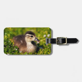 Wood duckling on the shoreline of Lindo Lake Luggage Tag