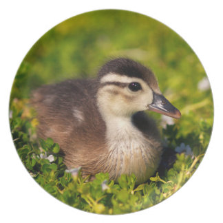 Wood duckling on the shoreline of Lindo Lake Plate