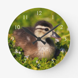 Wood duckling on the shoreline of Lindo Lake Round Clock