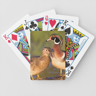 Wood Ducks and female on log in wetland Bicycle Playing Cards