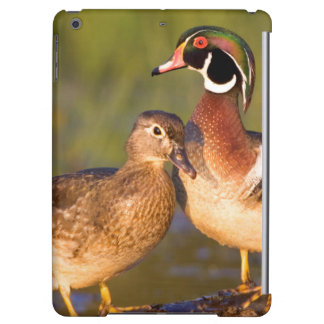 Wood Ducks and female on log in wetland Case For iPad Air