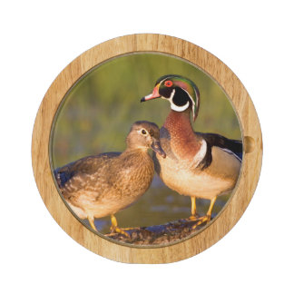 Wood Ducks and female on log in wetland Cheese Platter