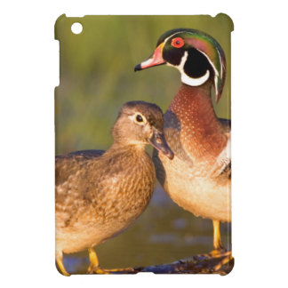 Wood Ducks and female on log in wetland Cover For The iPad Mini