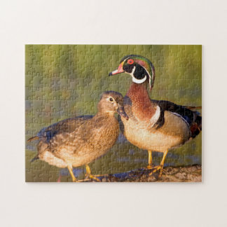 Wood Ducks and female on log in wetland Jigsaw Puzzle