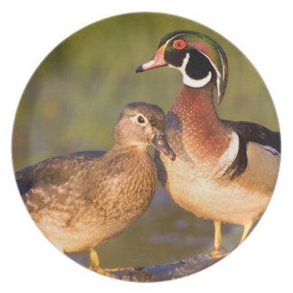 Wood Ducks and female on log in wetland Melamine Plate