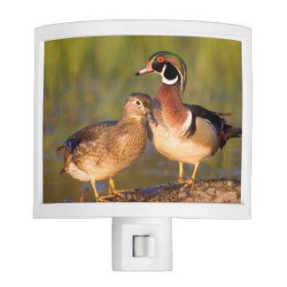 Wood Ducks and female on log in wetland Night Light