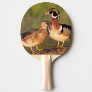 Wood Ducks and female on log in wetland Ping-Pong Paddle
