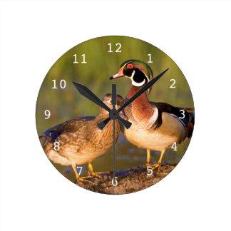 Wood Ducks and female on log in wetland Round Clock
