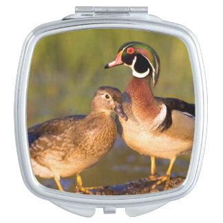 Wood Ducks and female on log in wetland Vanity Mirror