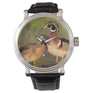 Wood Ducks and female on log in wetland Wrist Watch