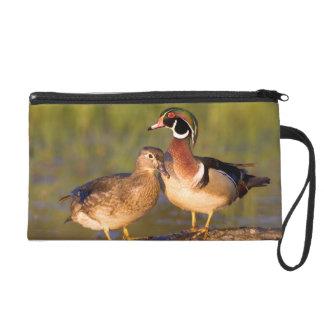 Wood Ducks and female on log in wetland Wristlet