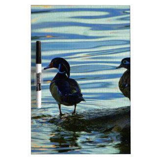 Wood Ducks at Sunset Dry Erase Board