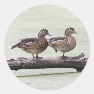 Wood Ducks Classic Round Sticker