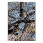 Wood Ducks in a Tree Cards