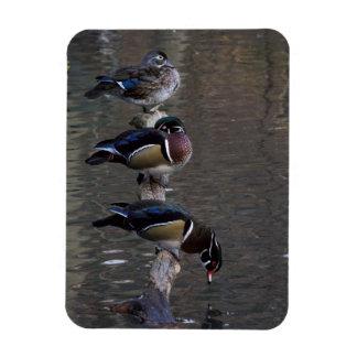 Wood Ducks on Branch Rectangular Photo Magnet