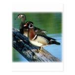 Wood Ducks Post Cards