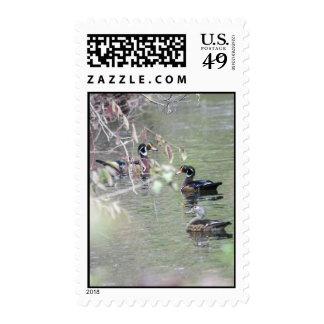 Wood Ducks Postage Stamps
