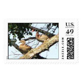 Wood Ducks Stamp