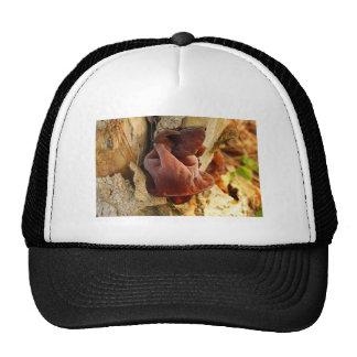 Wood Ear Mushroom Trucker Hat