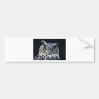 Wood eye is watchful - blinking eagle owl bumper sticker