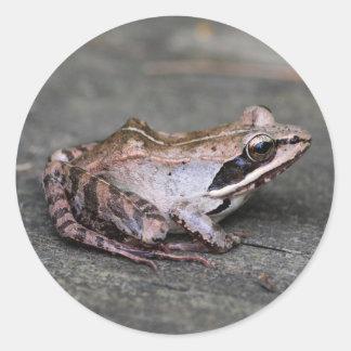 Wood Frog Classic Round Sticker