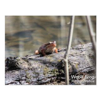 Wood Frog Postcard