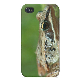 Wood frog. Rana sylvatica iPhone 4/4S Cover