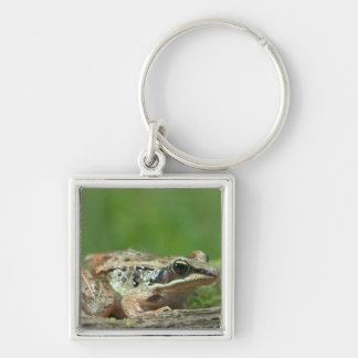 Wood frog. Rana sylvatica Silver-Colored Square Keychain