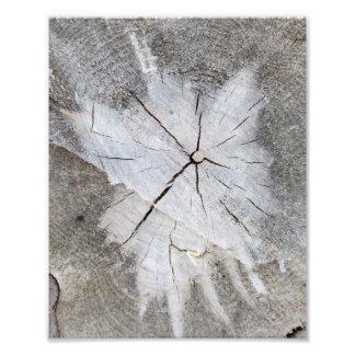 Wood Grain Gray Pine Tree Stump Photo Art 2