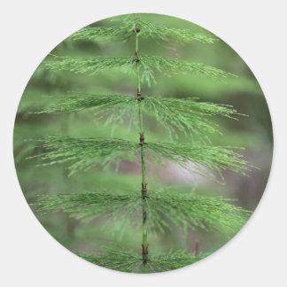 Wood Horsetail (Equisetum sylvaticum). Classic Round Sticker