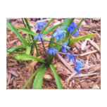 Wood Hyacinth Flowers Impasto Wrapped Canvas Canvas Prints