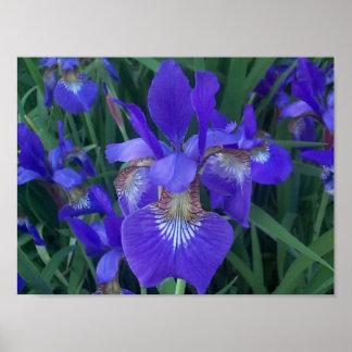 Wood Iris Poster
