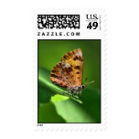 wood moth postage stamps