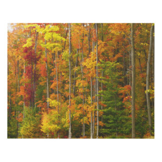 WOOD PANEL/WOODS AGLOW WITH FALL COLOR PANEL WALL ART