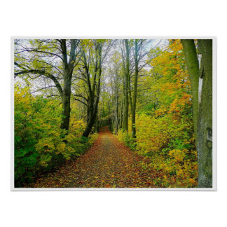 wood path through the trees poster FROM 8.99