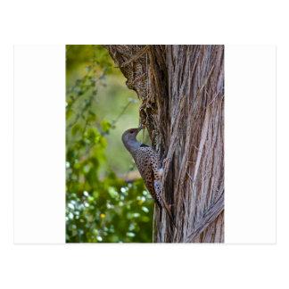 Wood Pecker Postcard
