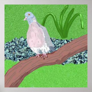 Wood Pigeon (Columba palumbus) Poster