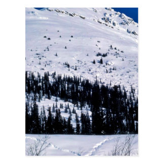 Wood River Drainage in Winter Postcard