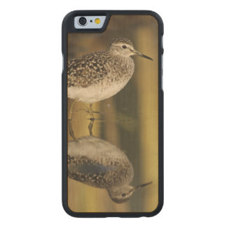 Wood Sandpiper, Tringa glareola,adult, Samos, Carved Maple iPhone 6 Slim Case
