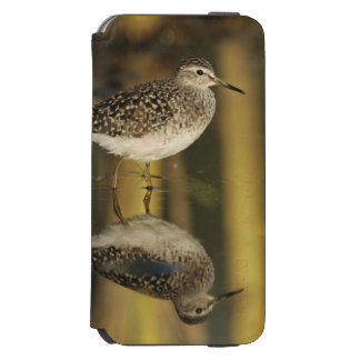 Wood Sandpiper, Tringa glareola,adult, Samos, iPhone 6/6s Wallet Case