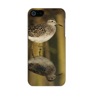 Wood Sandpiper, Tringa glareola,adult, Samos, Metallic Phone Case For iPhone SE/5/5s