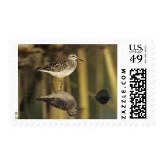 Wood Sandpiper, Tringa glareola,adult, Samos, Postage Stamp