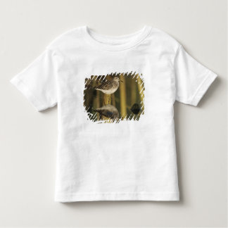 Wood Sandpiper, Tringa glareola,adult, Samos, Toddler T-shirt