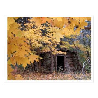 Wood shack under yellow leaves postcard