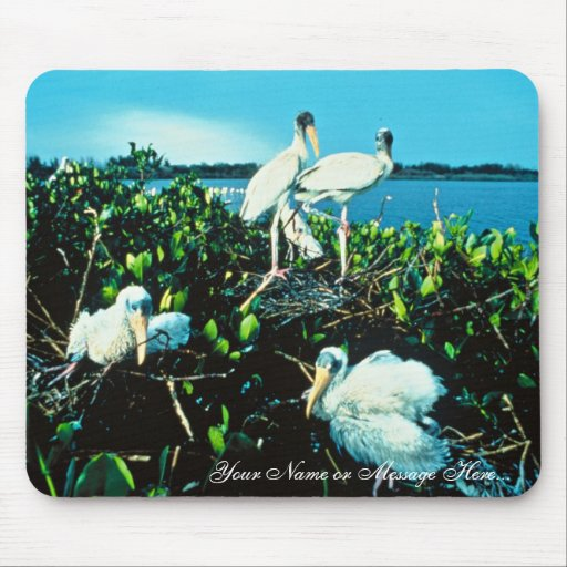 Wood Stork Chicks Mouse Pads