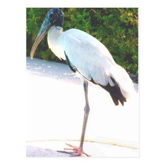 Wood stork in evening wear postcard